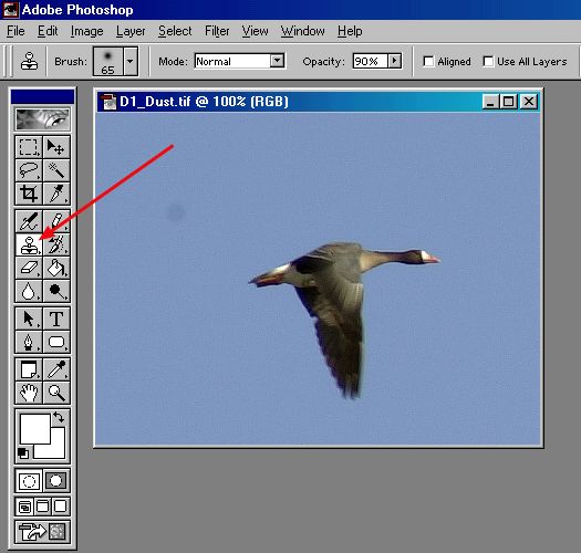 Canadian Goose: Selecting the Rubber Stamp tool